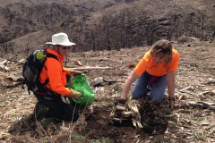 Royal Gorge Tree Planting After the 2013 Fire 05-15-14 014